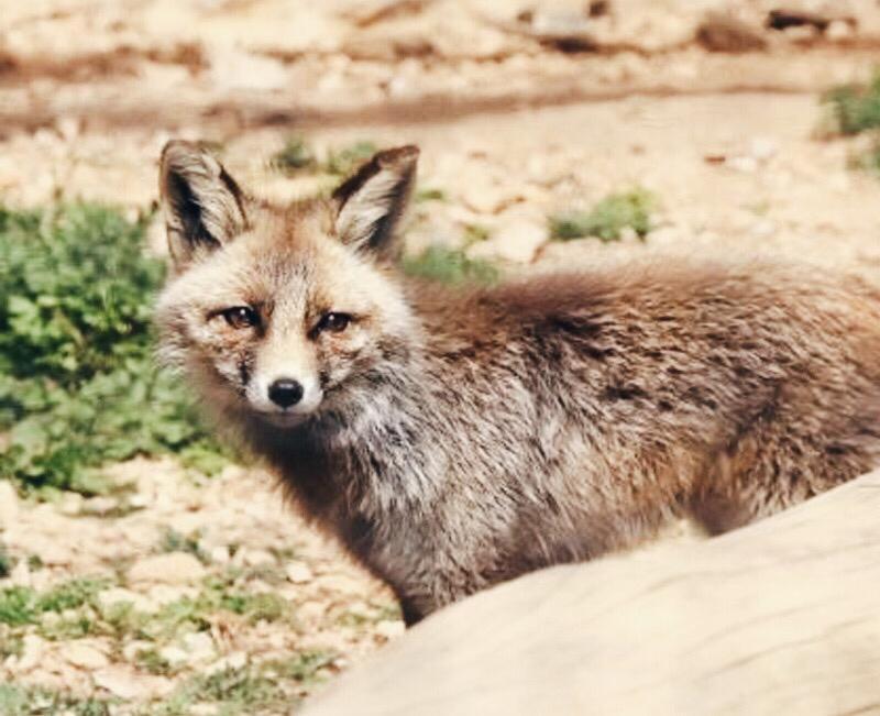 zoo-del-pirineu